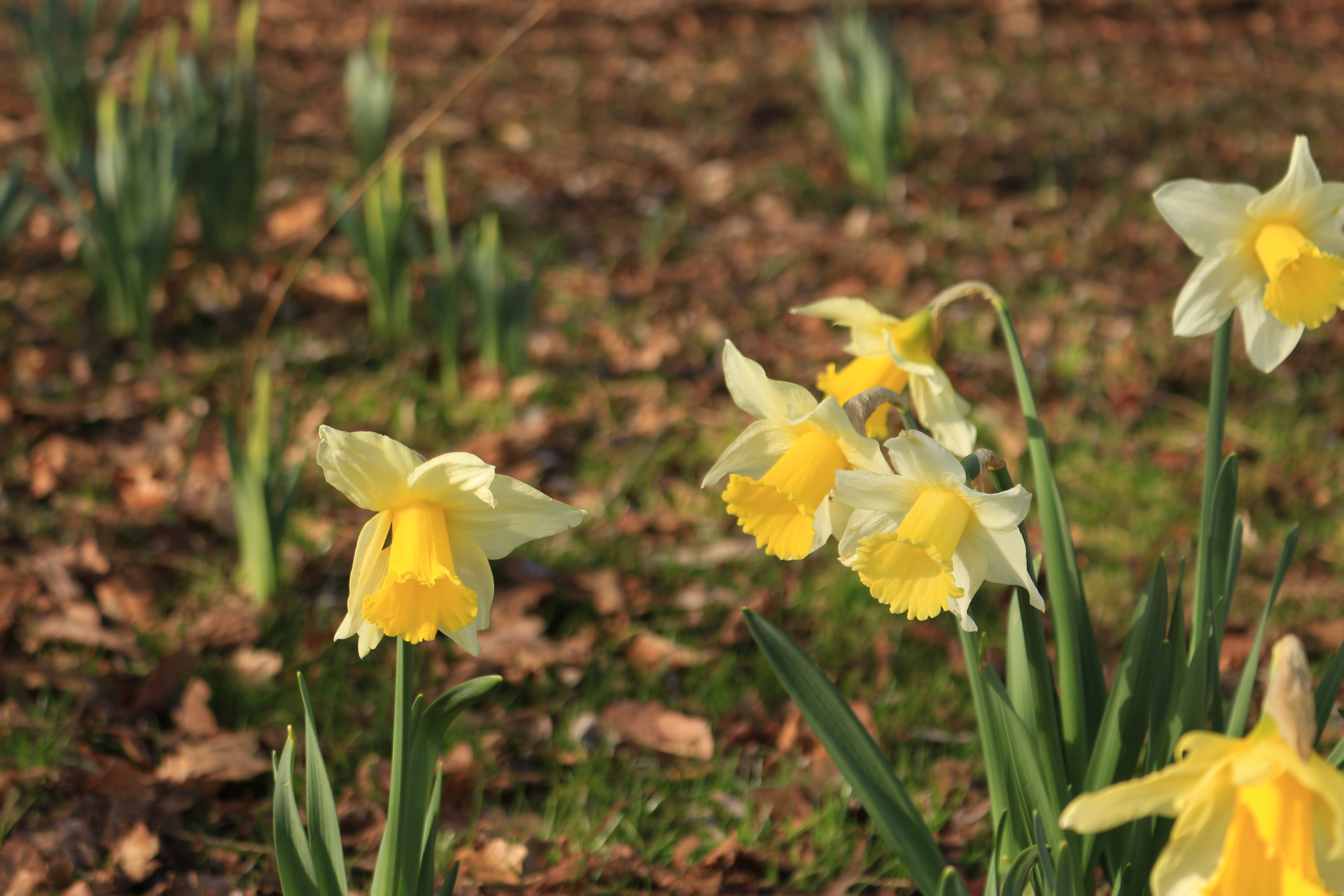 Blog Tales From A Country Garden